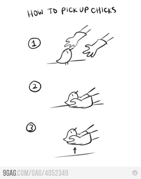 How to pick up chicks!
